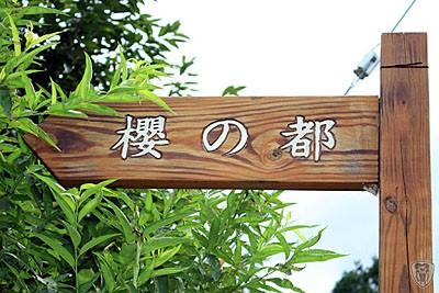 新竹五峰達陸の新櫻之都 @定點露營